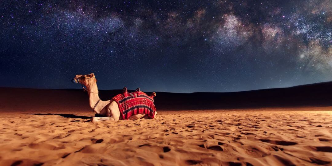 Where can I ride a camel in Dubai?