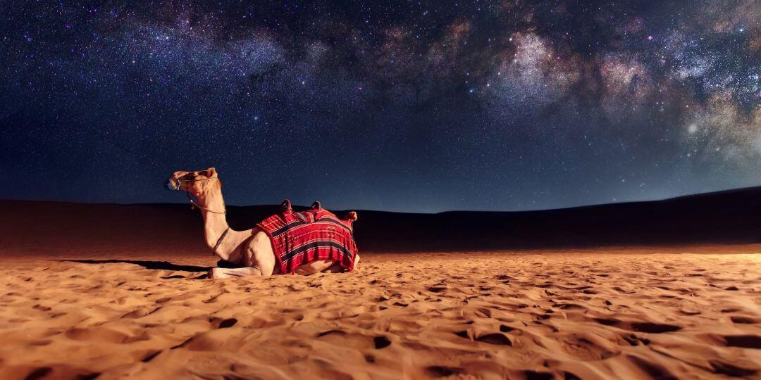 Where can I ride a camel in Dubai?