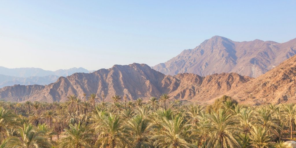Date farms and Hajar Mountains