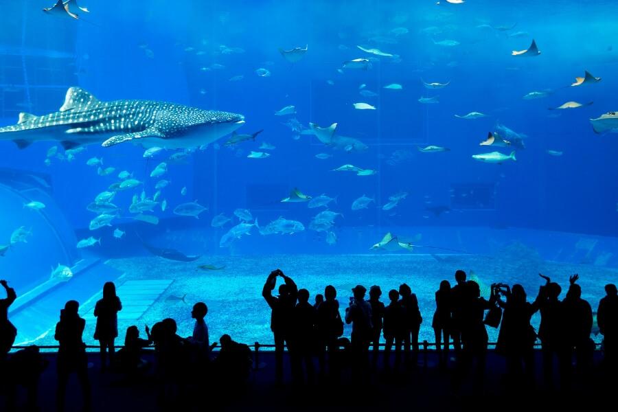 The Dubai Aquarium crowds watching inside the Dubai Mall