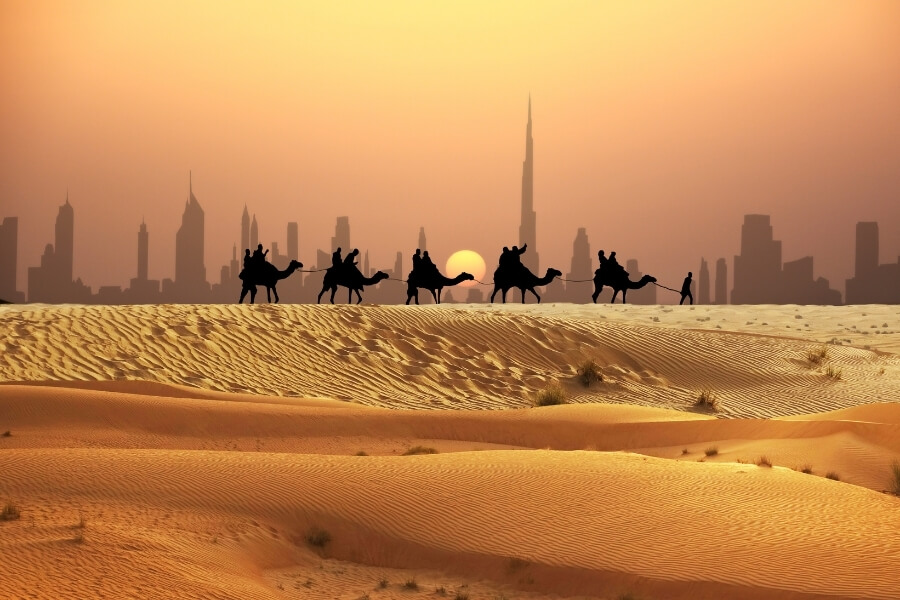 A camel train at sunset with Burj Khalifa and downtown dubai in background
