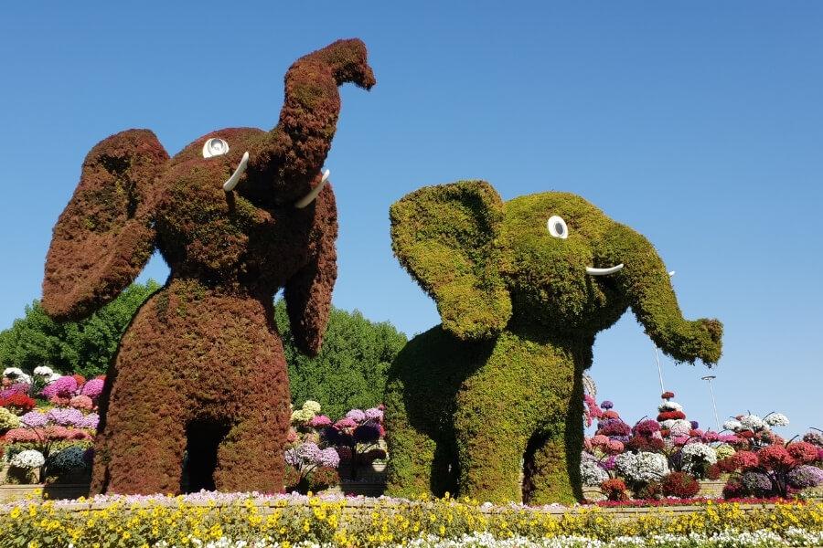 Dubai Miracle Garden - Topiary Elephants