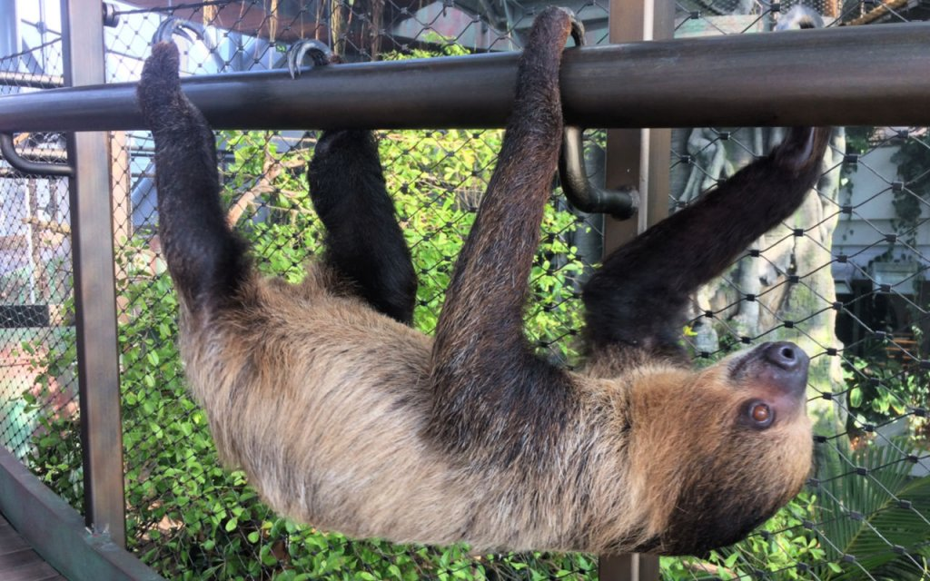 A sloth at the Green Planet Dubai