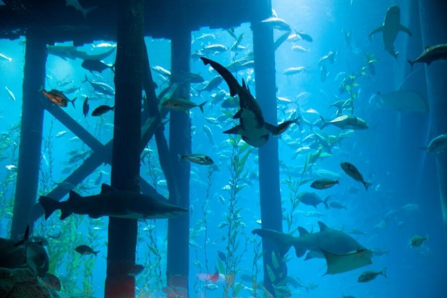 Experience Dubai Mall Aquarium & Underwater Zoo